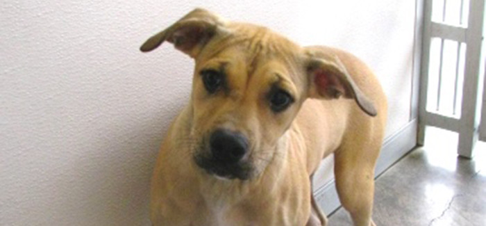 """Check out our """"Pet of the Week"""" at the Saginaw Animal Shelter."""