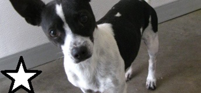 """Check out our """"Pet of the Week"""" at the Saginaw Animal Services"""