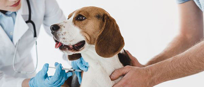Irving: Vaccinate Your Dog, Protect Them Against Distemper and Parvo