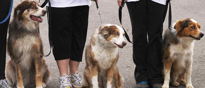 Fort Worth: People and pooches, get ready for the Dog Walking Town Hall