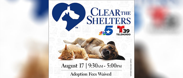 Bedford: Help Clear the Shelters