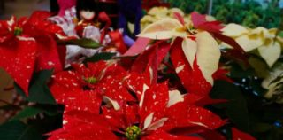 Experience the holiday beauty of the Fort Worth Botanic Garden on Dec. 14