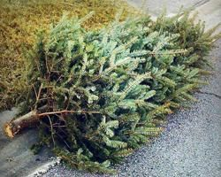 North Richland Hills – Christmas Tree Recycling