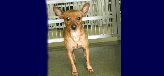 """""""Pet of the Week"""" at the Saginaw Animal Services Department"""