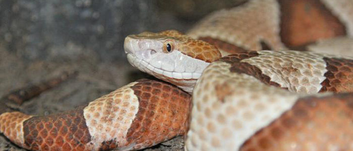 Colleyville: City to host information session on snakes
