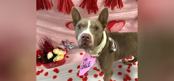 Fort Worth: There's no place like home for a shelter pet