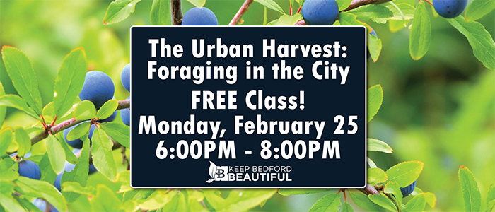 Bedford: The Urban Harvest: FREE Foraging in the City Class