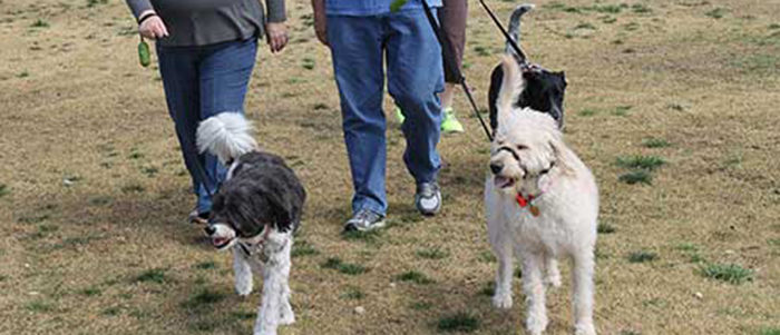 Irving: Four-Legged Family Members Invited for Fun at Pet Pawlooza May 11