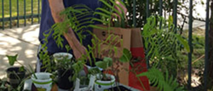 Euless: Plant and Seed Swap