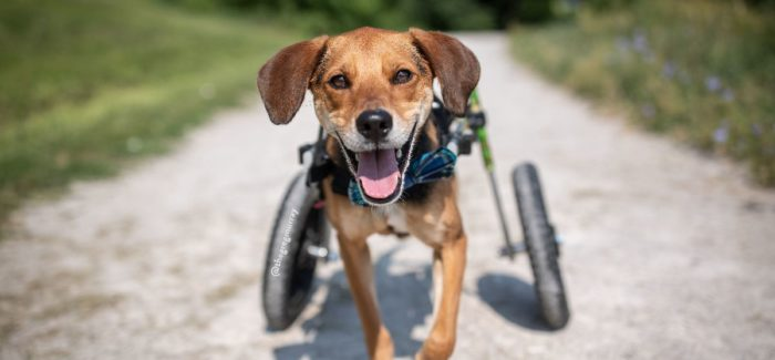 Pet Calendar Contest Celebrates Miracles in Motion Contest Winners Announced