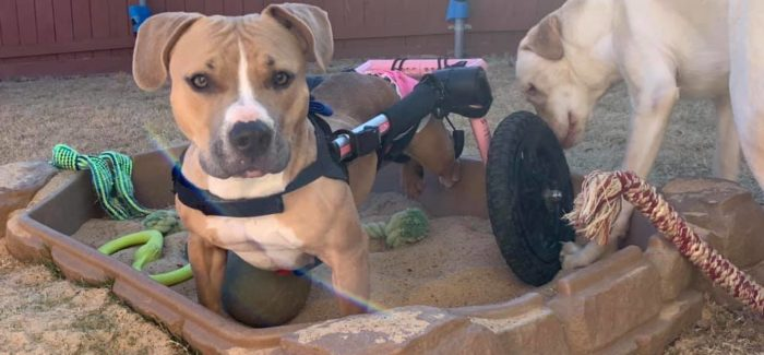 Disabled Pup Wants to Change Lives of Underdogs Just Like Her